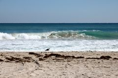 Sonniger Tag auf Florida-Strand mit einziger Seemöwe Stockfotografie