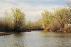 Sonniger Tag des forestsees im Frühjahr Stockfotografie
