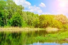 Sonniger Tag des Frühlinges auf der Flussbank Stockfotos