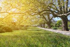 Sonniger Tag des Frühlinges im botanischen Garten Stockbild