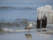 Sonniger Tag des Winters auf Strand in Ustka-Stadt Polen Lizenzfreie Stockbilder