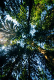 Sonniger Tag in einem grünen Wald Stockfotos