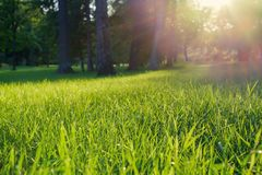 Sonniger Tag im Park draußen Strahlen des grünen Grases und der Sonne Stockbilder