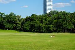 Sonniger Tag im Stadtpark in Budapest mit zwei Leuten auf grünem Gras stockfoto
