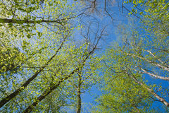 Sonniger Tag im Wald Lizenzfreie Stockbilder