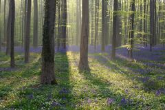 Sonniger Tagesim frühjahr Wald lizenzfreie stockfotografie
