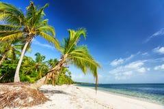 Sonniger tropischer Strand in der Dominikanischen Republik stockfotografie