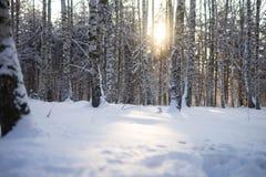 Sonniger und eisiger Morgen des Winters im Wald stockfoto