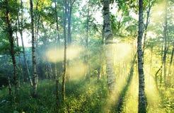Sonniger Wald Lizenzfreies Stockbild