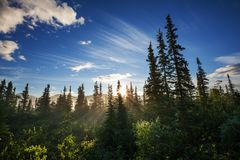 Sonniger Wald Lizenzfreie Stockfotografie