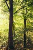 Sonniger Wald Lizenzfreies Stockfoto
