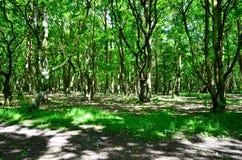 Sonniger Wald Stockfotografie