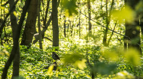 Sonniger Wald Lizenzfreie Stockbilder