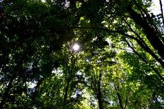 Sonniger Wald Stockbild