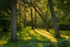 Sonniger Wald am Abend Stockbilder