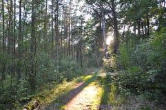 Sonniger Wald des Frühlinges Lizenzfreie Stockbilder