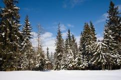 Sonniger Wald im Winter Stockfotografie