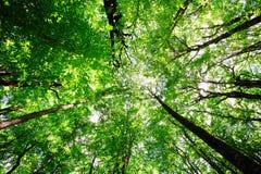 Sonniger Waldhintergrund Stockbild