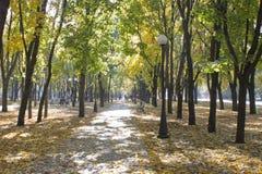 Sonniger warmer Tag auf dem Boulevard im Herbst Stockbild