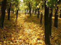 Sonniger Weg des Herbstes Stockbilder