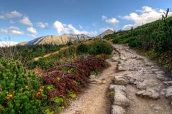 Sonniger Weg des Herbstes Gebirgs Stockfotografie