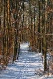 Sonniger Weg des ruhigen Schnees Lizenzfreie Stockfotografie