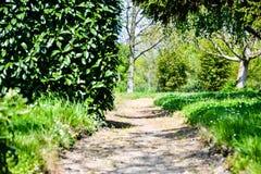 Sonniger Weg in einem Landgarten - ruhig und ruhig stockfotos