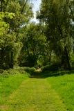 Sonniger Weg zur Holzbrücke im Wald mit hohen Bäumen im Sommer, Waltham-Abtei, Großbritannien Stockbild