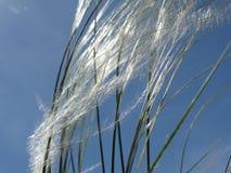 Sonniger Windschlag Lizenzfreie Stockbilder