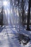 Sonniger Winter-Wald Stockbild