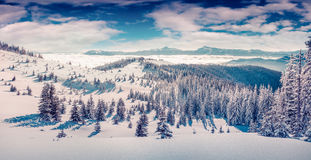 Sonniger Wintermorgen im Karpaten Lizenzfreies Stockbild