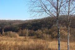 Sonniger Wintertag Lizenzfreie Stockfotografie