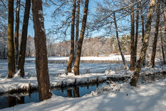 Sonniger Wintertag stockfotos