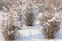 Sonniger Wintertag in einem Stadtpark Lizenzfreie Stockbilder