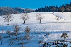 Sonniger Wintertag im schwarzen Wald lizenzfreie stockbilder