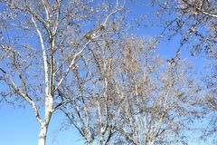 Sonniger Wintertag in Madrid Spanien Lizenzfreies Stockfoto