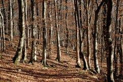 Sonniges braunes Unterholz Stockfotografie