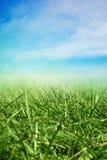 Sonniges Feld des Frühlinges Lizenzfreie Stockbilder