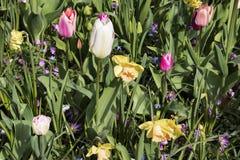 Sonniges Feld mit Tulpen und Blumen stockbild