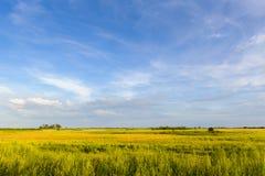 Sonniges grünes Feld und blauer Himmel abend stockfoto