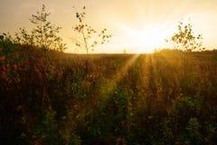 Sonniges herbstliches Feld Stockfoto
