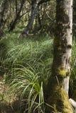 Sonniges Kabel im Gras Stockfotos