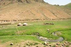 Sonniges Tal mit traditionellen Familienlandwirtwohnmobilen und -kühen auf Ackerland Stockfotografie