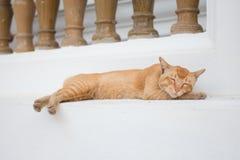 Sonno arancio del gatto sul pavimento Fotografia Stock Libera da Diritti