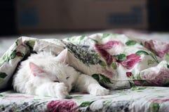 Sonno bianco del gatto Immagine Stock Libera da Diritti