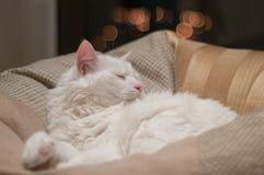 Sonno bianco del gatto Fotografia Stock Libera da Diritti