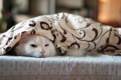 Sonno bianco del gatto Fotografie Stock Libere da Diritti