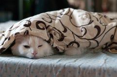 Sonno bianco del gatto Immagini Stock Libere da Diritti