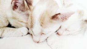 Sonno dei gattini immagini stock libere da diritti