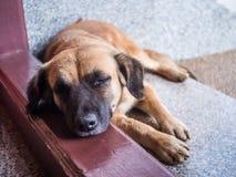 Sonno del cane Fotografie Stock Libere da Diritti